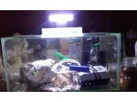 TROPICAL AQUARIUM/FISH TANK