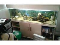 5 foot tropical fish tank and unit