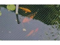 Koi Fish for sale and variety of other pond fish