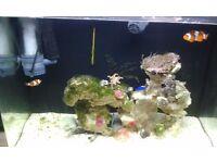 Nano 100 litres marine tank