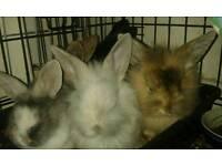 Baby rabbits ready now