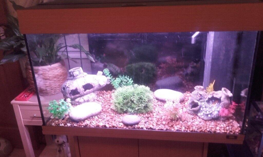 Juwel fish tank & beech stand (full tropical set up)