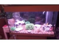 Juwel fish tank & beech stand (full tropical set up)