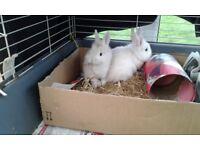 3 baby rabbits
