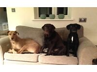 'HAPPY HOUNDS' home-from-home dog boarding. You'll never use kennels again!