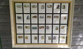 Large print of birds