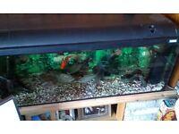 TROPICAL FISH/SILVER DOLLARS/KNIFEFISH/PETS/FISH