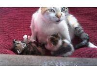 kittens sale not ready 4 weeks