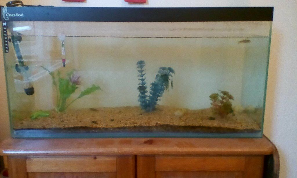 Fish Tank 50 Lit For Only 6 In Broadstairs Kent Gumtree