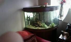 Corner aquarium Dark oak design
