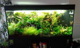 4 foot Planted fish tank