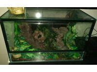 3x Baby Morph Ball Pythons & Glass Vivarium