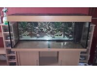 Juwel rio 240 4ft aquarium fish tank and cabinet