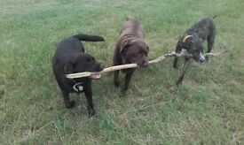 Dog Walking / Dog Walker - friendly, happy and reliable walks in Gloucester and surrounding areas