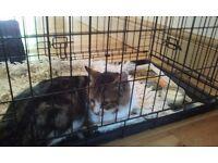 FOUND MALE TABBY CAT ( SHILTON LANE AREA )