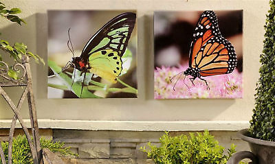 Set of 2 Butterfly Framed Canvas Prints Indoor / Outdoor UV Protection - 2 Outdoor Canvas Prints