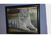 Pair of large framed Tiger Pictures