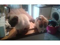 2 female cats for rehoming