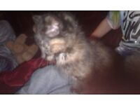 Kittens in need of new homw