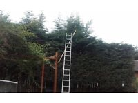 garden maintenance/conifer cutting and control/tree control