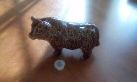 Whisky brown bull