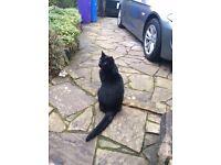 missing cat TONY