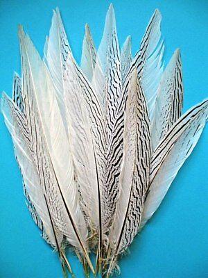 5 Pcs SILVER PHEASANT Natural Feathers 10-16