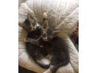 Two beautiful kittens