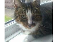 Male Neutered Cat