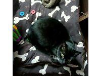 Beautiful black and white cat