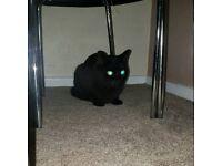 Cat - Bertie
