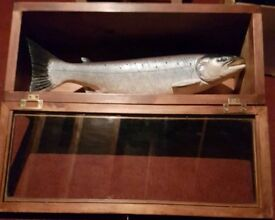 Ceramic salmon in a beautiful mahogany glass case