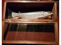 Ceramic salmon in a beautiful mahogany glass case