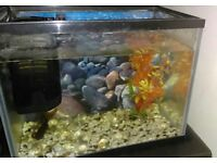 Fish, tank and filter
