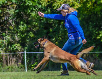 Online Dog Training Company Needs Email Campaign Specialist!