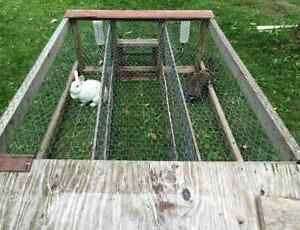 Two Bunnies and an Outdoor Hutch for Sale