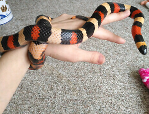 Apricot milk snake with tank and accessories!
