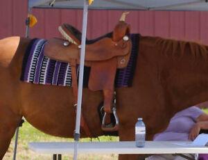 "16"" Barrel saddle"