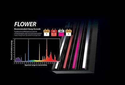 PowerVEG T5 HO 4FT Bulbs for 4-Light Best Set-up for BLOOM (Flower, (Best T5 Bulbs For Flowering)