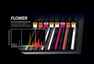 PowerVEG T5 HO 2FT Bulbs for 8-Light Best Set-up for BLOOM (Flower, (Best T5 Bulbs For Flowering)