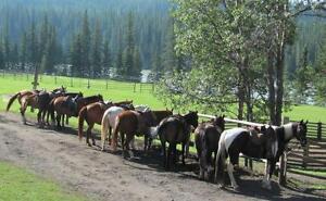 Guided Horseback Trail Rides Near Jasper National Park Edmonton Area image 6