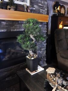 LARGE BONSAI - ALMOST NATURAL - MINT CONDITION
