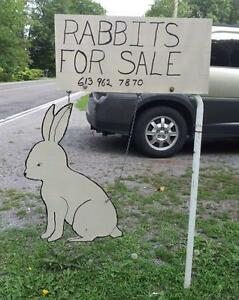 Rabbits and fertilizer for sale