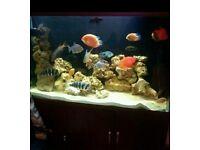 Fish tank aquarium for sale