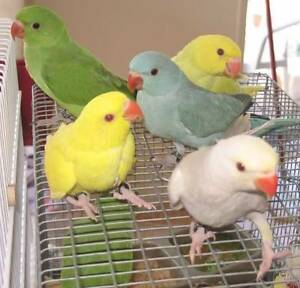 BIRDS WANTED Cranbourne East Casey Area Preview