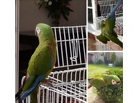 Beautiful Macaw For sale