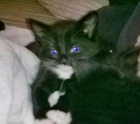 3 Kittens. 2 male 1 female