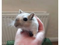 Gerbil with cage to loving home