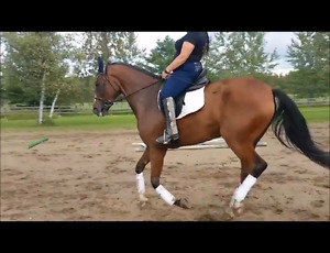 7 years old mare mustang