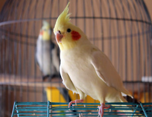 Bird/s wanted
